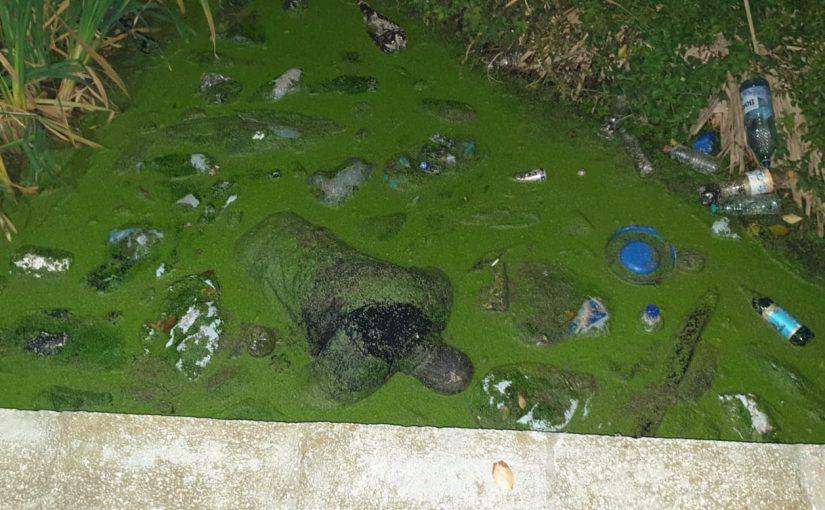 cadavru piscina
